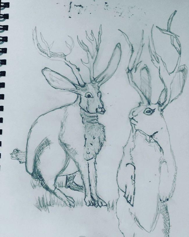 Sunday night sketches Sketchbook Pencil Jackalopes