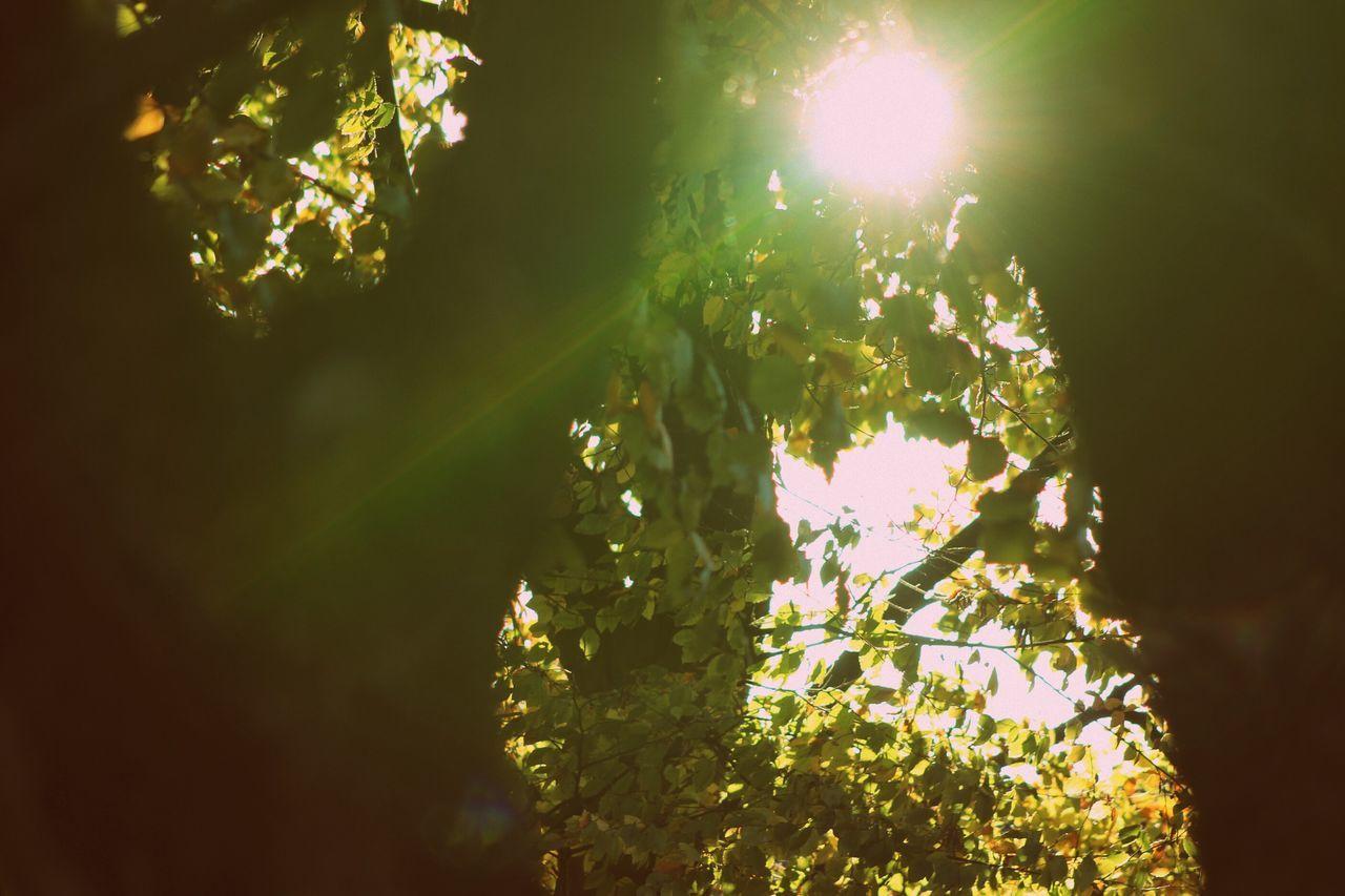 Green Flash Nature Tree Outdoors Sunbeam Illuminated Beauty In Nature No People Refraction Milky Way Trees Sun Glare