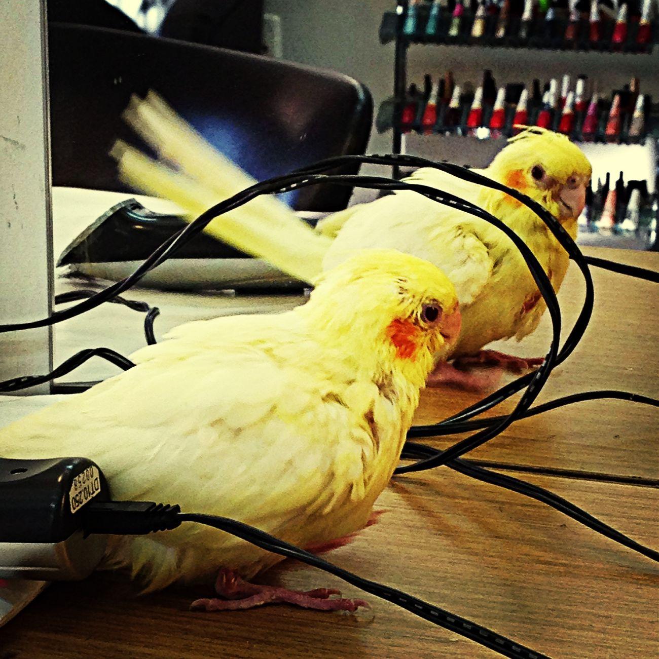 Bird Yellow Lovely Cutie