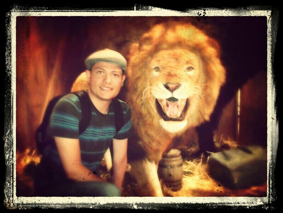 Miau! Lion