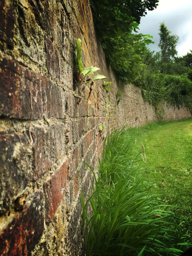 Moss Beauty In Nature The Moot Grass Slopes Ornamental Garden Outdoors Old Wall Village History Architecture Selective Focus Close-up Patterns In Nature Brick Wall Brick Work Garden Home Is Where The Art Is