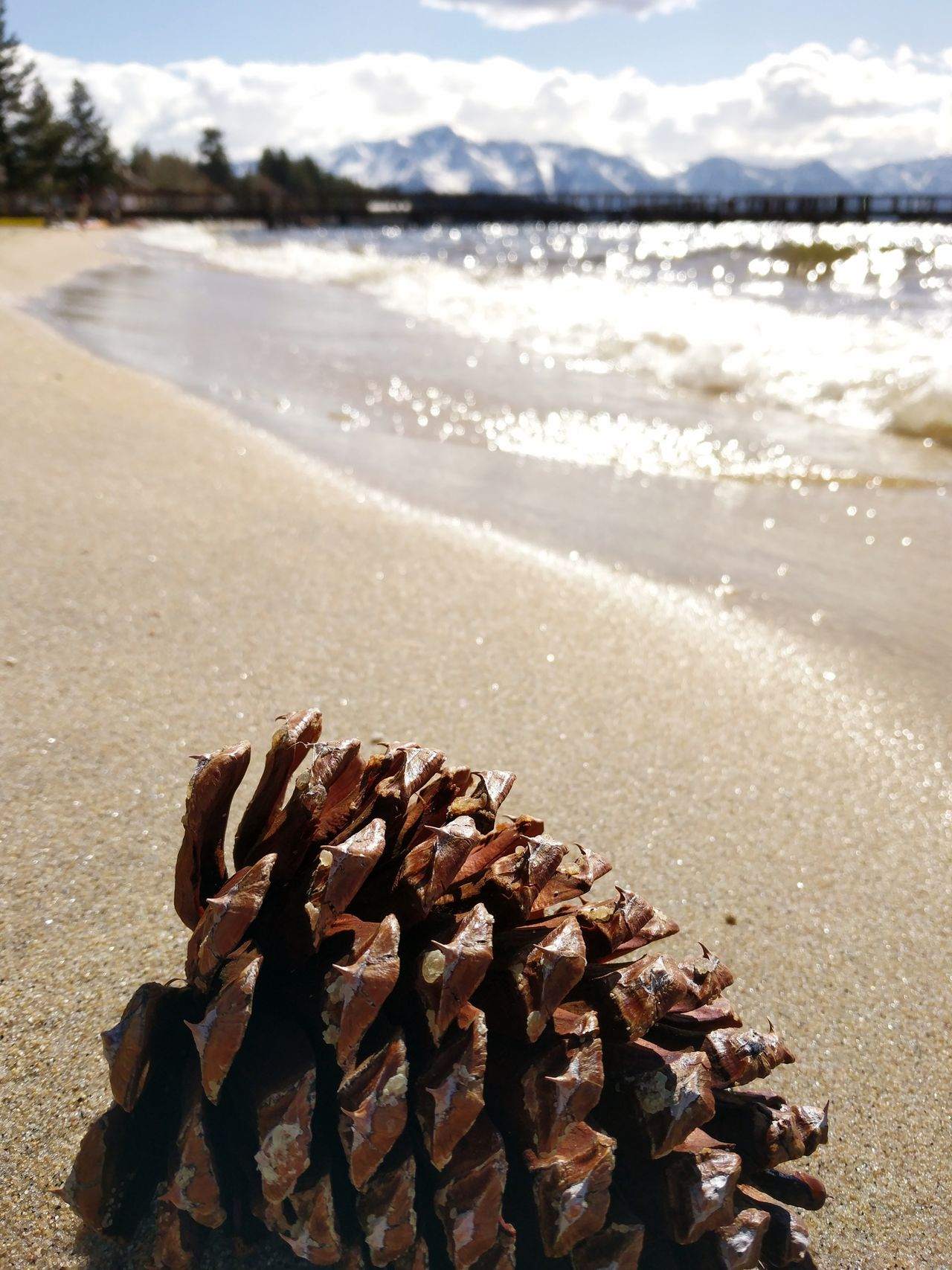 Alpine Beach California Alpine Lake Lake Mountains And Beach Summer Day Sky Beauty In Nature Outdoors Beach Sunlight Macro Waves Sierra Nevada Mountains Water Pine Cone Close-up Tranquillity Travel Tide Sand