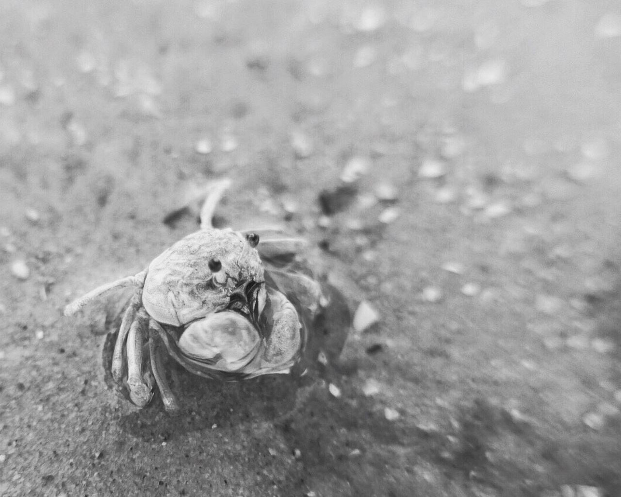 one animal, animal themes, animals in the wild, hermit crab, animal wildlife, no people, day, outdoors, sea life, close-up, beach, nature