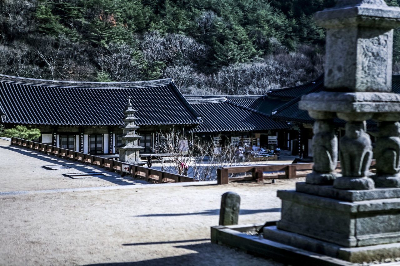 Abandoned Architecture Buddhism Buddhist Temple Building Exterior Built Structure Damaged Day Exterior Famous Place Famous Places Historic House Leading Log Old Old Place Outdoors Residential Structure Roof Selective Focus Spirituality Wood Wood - Material Wooden