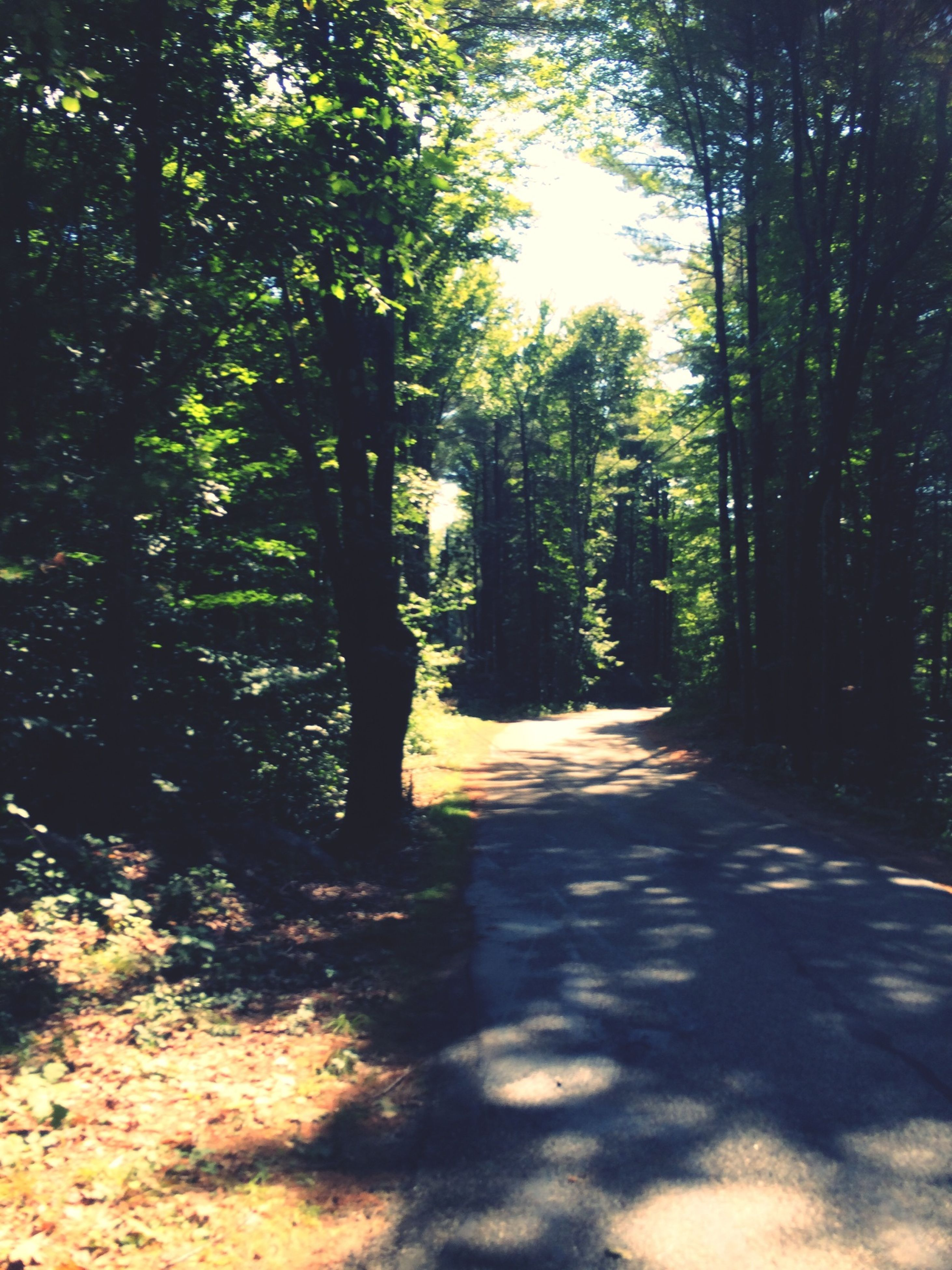 tree, the way forward, tranquility, forest, tree trunk, shadow, diminishing perspective, growth, sunlight, road, nature, tranquil scene, vanishing point, footpath, dirt road, transportation, beauty in nature, treelined, day, outdoors