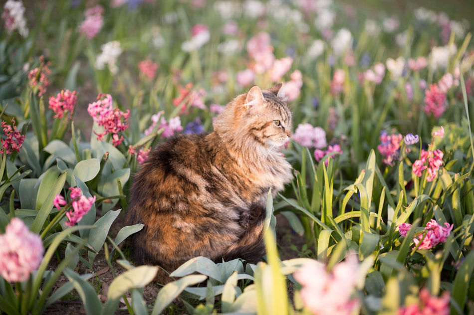 Spring Colors Mugshot I Animal Themes Cat Cats Cat♡ Flower Flowers Fluffy Focus On Foreground Mammal Nature Nature On Your Doorstep Nature Photography Nature_collection Nature_perfection Naturelovers No People One Animal Outdoors Park - Man Made Space Selective Focus Spring Spring Flowers Springtime Stray Cat Warm