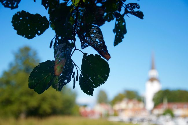 Mariefred Sweden Tree Focus On Foreground Church Close-up Scenics Beauty In Nature EyeEm Best Edits EyeEmBestPics EyeEm Gallery EyeEm Best Shots Eye4photography  Naturelovers Nature Photography Landscape_Collection Landscape_photography Eye Em Nature Lover Nature_collection Gripsholm