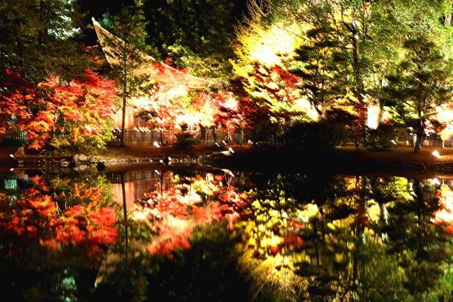 紅葉 趣味 Canon Eos  秋 田舎 ライトアップ