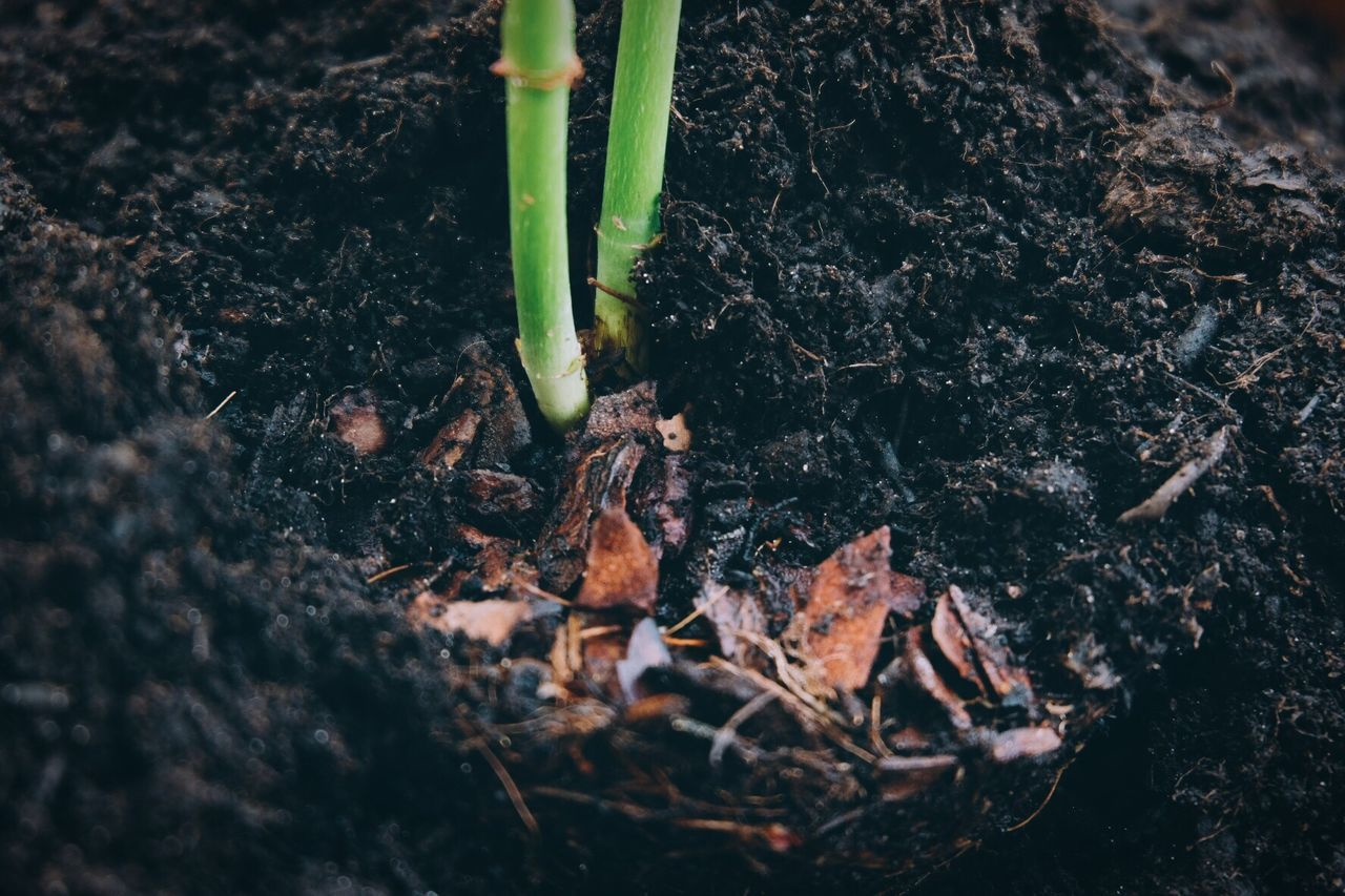 Growth Beginnings Nature New Life Green Color Plant Leaf No People Outdoors Day Close-up Macro Beauty In Nature Freshness Minimalism Gardening Garden Nature On Your Doorstep The Great Outdoors - 2017 EyeEm Awards Eye4photography  Taking Photos EyeEm Gallery Eyeemphotography Looking Down Soil