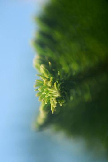 Eyeem Plants Leaf Leafs Leaves Plants Plants And Flowers Plants 🌱 Tropical Plants