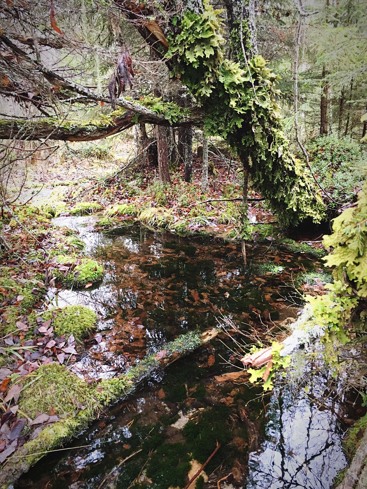 Spring Water straight from Nature Spring Beauty In Nature Outdoors Forest Green Autumn