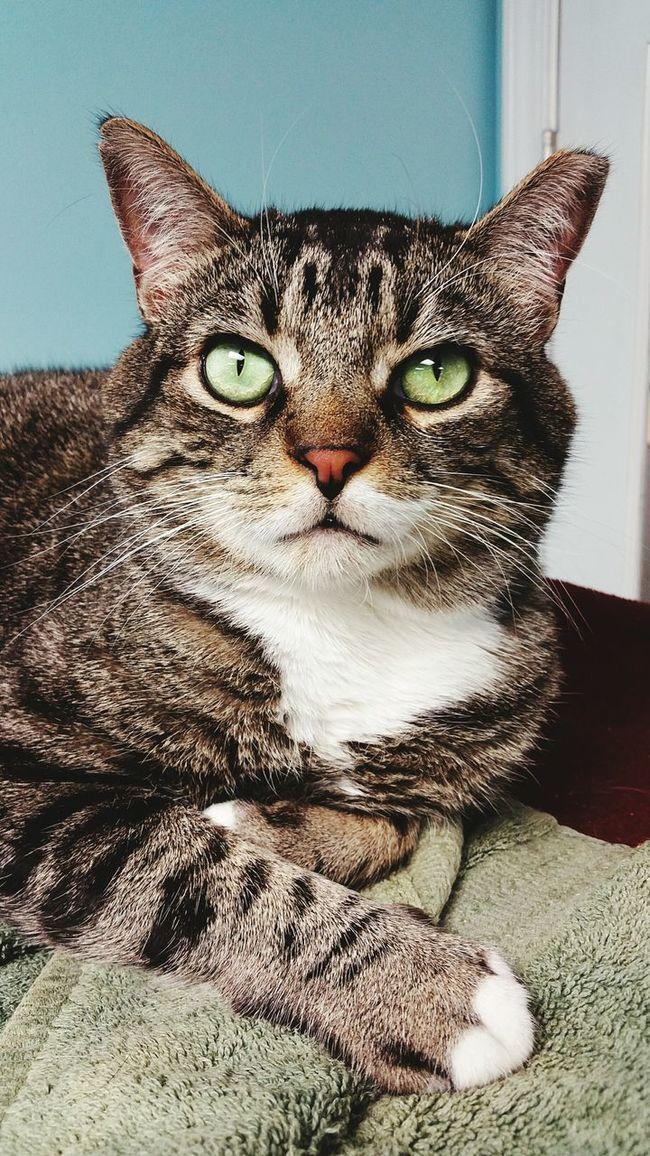 Pet Cute Pets Feline Cat Relaxing Furkids Atlanta Ga