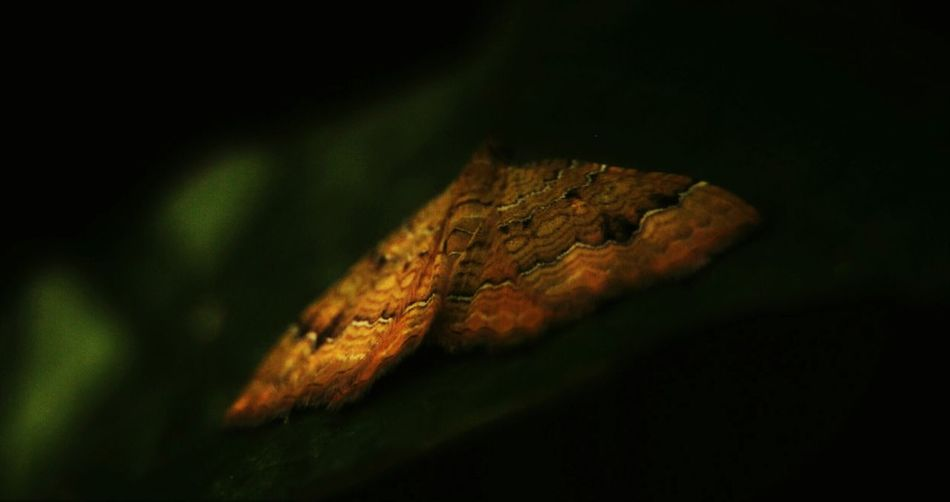 Sleepy june Nature Nature_collection Naturelovers Insect Insect Photography Butterfly
