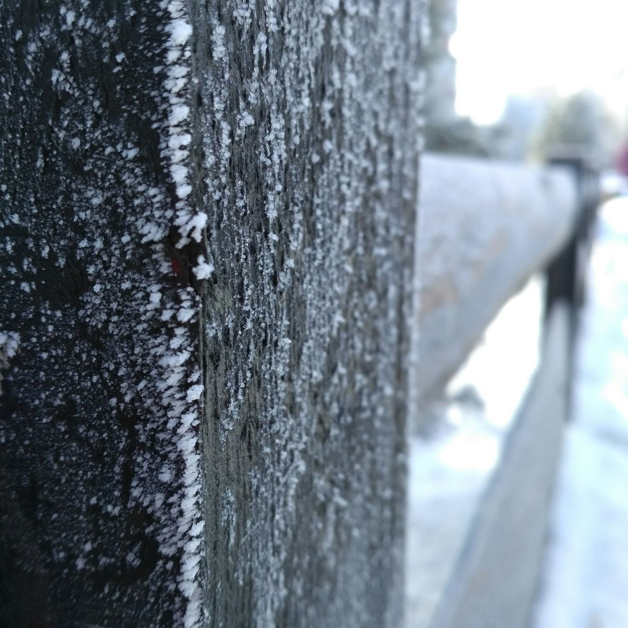 textured, day, close-up, no people, snow, nature, outdoors, winter, tree, cold temperature, beauty in nature, animal themes
