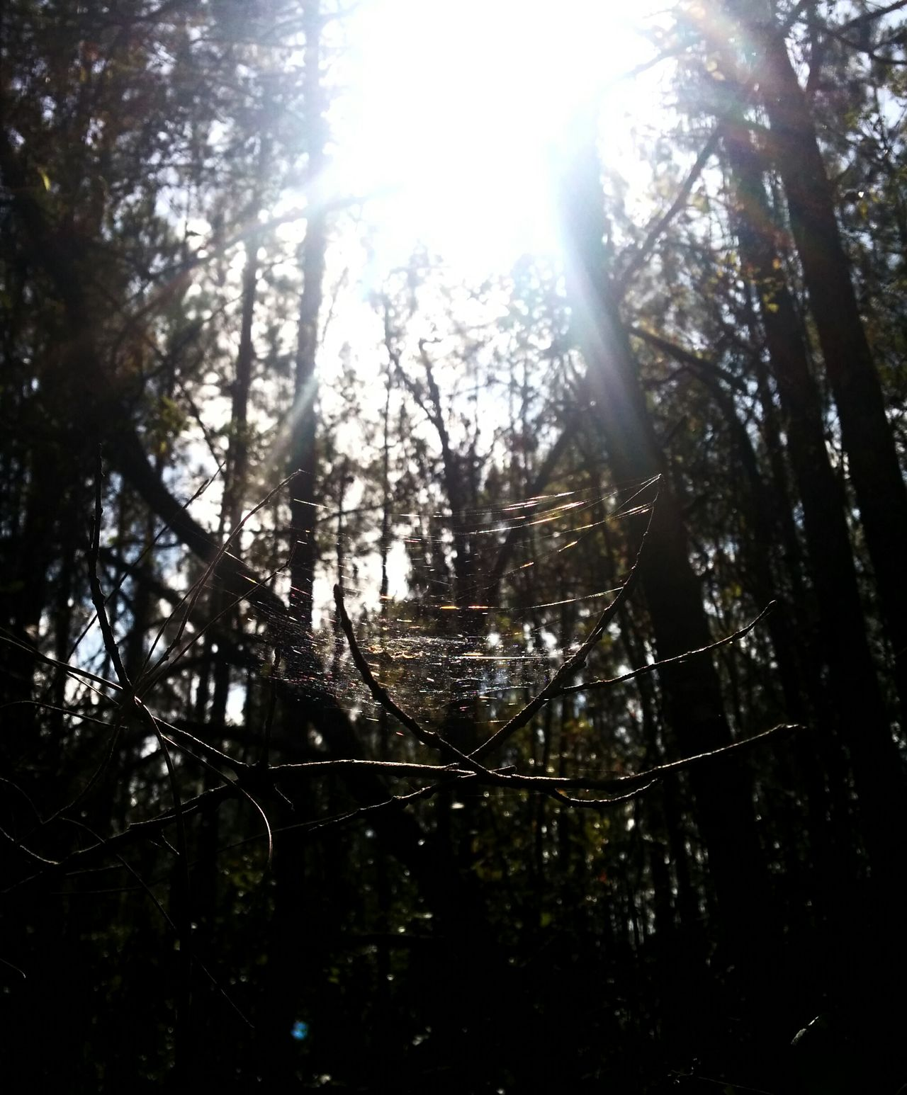 Spider Web Sunbeams Sunlight Playing With The Shadows Nature Photography
