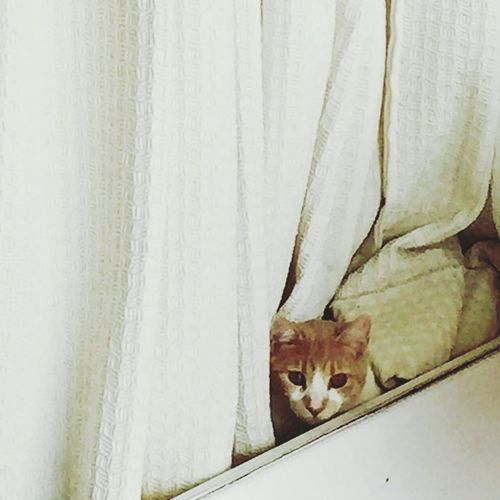 Cat Animal Themes One Animal No People Pets Mammal Curtain Domestic Animals Indoors  Nature Day Cat Lovers Cats Of EyeEm Cat♡