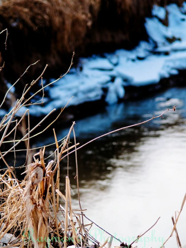 Getolympus Olympus Ilovephotography The Photographer Nature Photography Photography Is My Escape From Reality! Photographer Photography Photo♡ Snow ❄ Winter Creeks Down By The Creek Creek Nature Beautiful Nature Beauty In Nature Enjoying Nature Connected With Nature Naturelovers