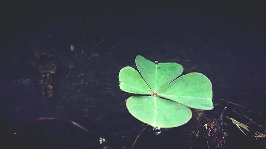 Good luck...... Lucky Trebol Trebol De Cuatro Hojas SUERTE Leaf Close-up Green Color Nature Plant Focus On Foreground Growth Leaf Vein Growing Fragility Day Outdoors Tranquility Weathered Freshness No People Beauty In Nature First Eyeem Photo