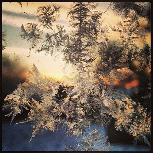 Near And Far Ice Age Taking Photos Outdoors Nature Transparent Ice Ice Crystals Sunrise Morning sun, ice crystals , cold,