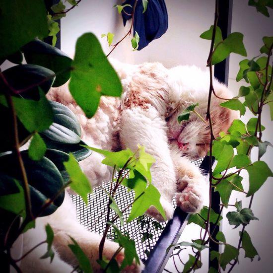 Natru Natrual Beauty  Have Fun Living Life Taking Photos Check This Out Hello World Enjoying Life Life Cat