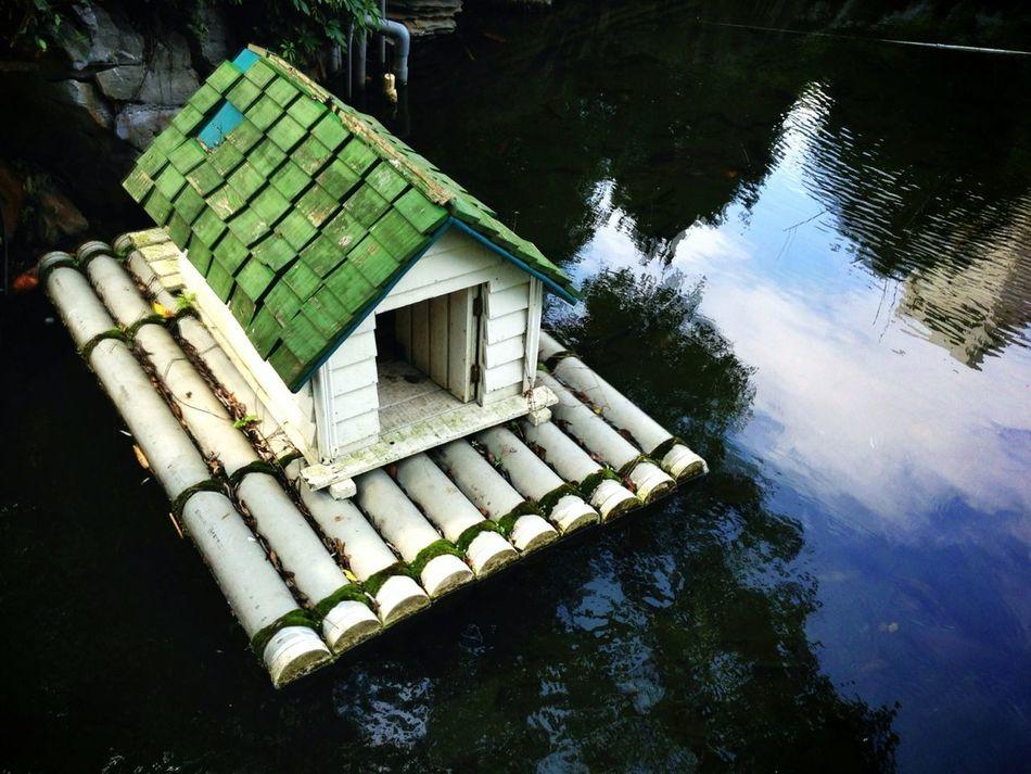 交大的鴨子很幸福,有很棒的別墅住〜