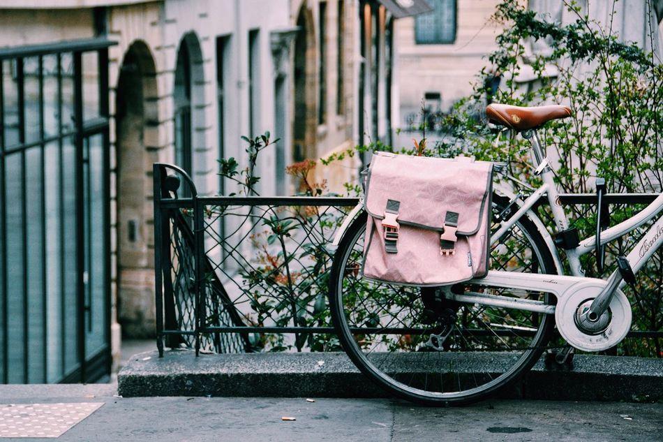 Beautiful stock photos of fahrrad, no people, outdoors, day, tree