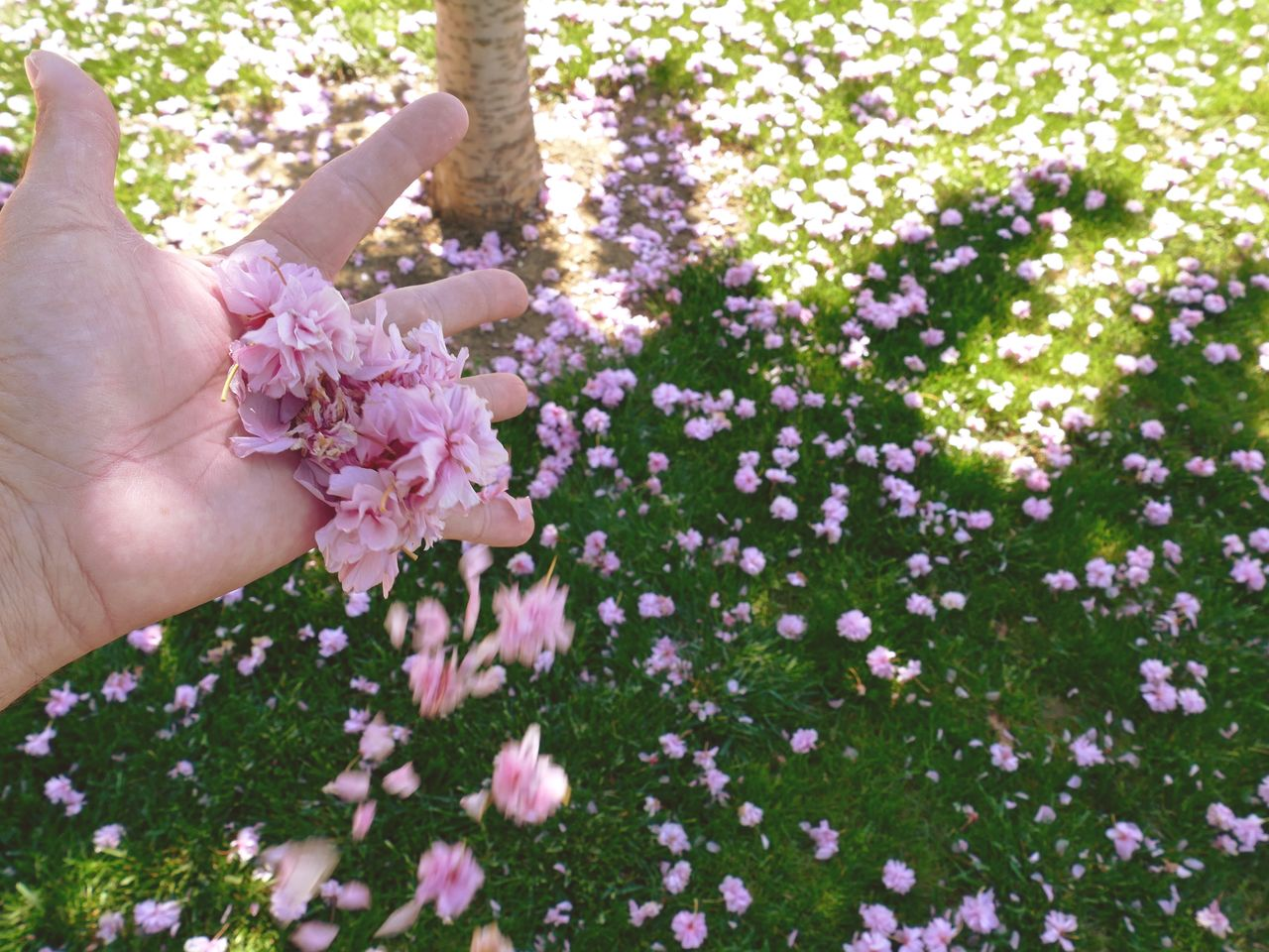 Cropped Image Of Hand Holding Falling Flowers At Park