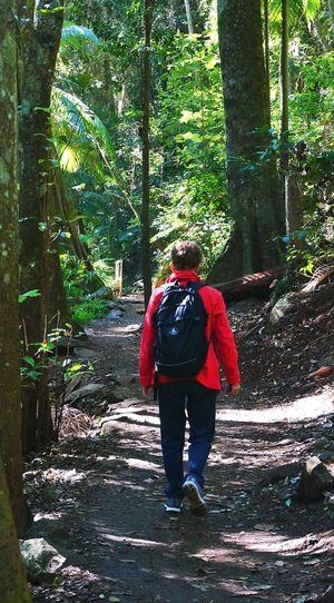 Hiker in red jacket on forest trail. Bushwalker Casual Clothing Day Forest Forest Path Forest Walks Hiker Leisure Activity Lifestyles Nature Outdoors Rear View Red Jacket The Way Forward Tree Tree Trunk