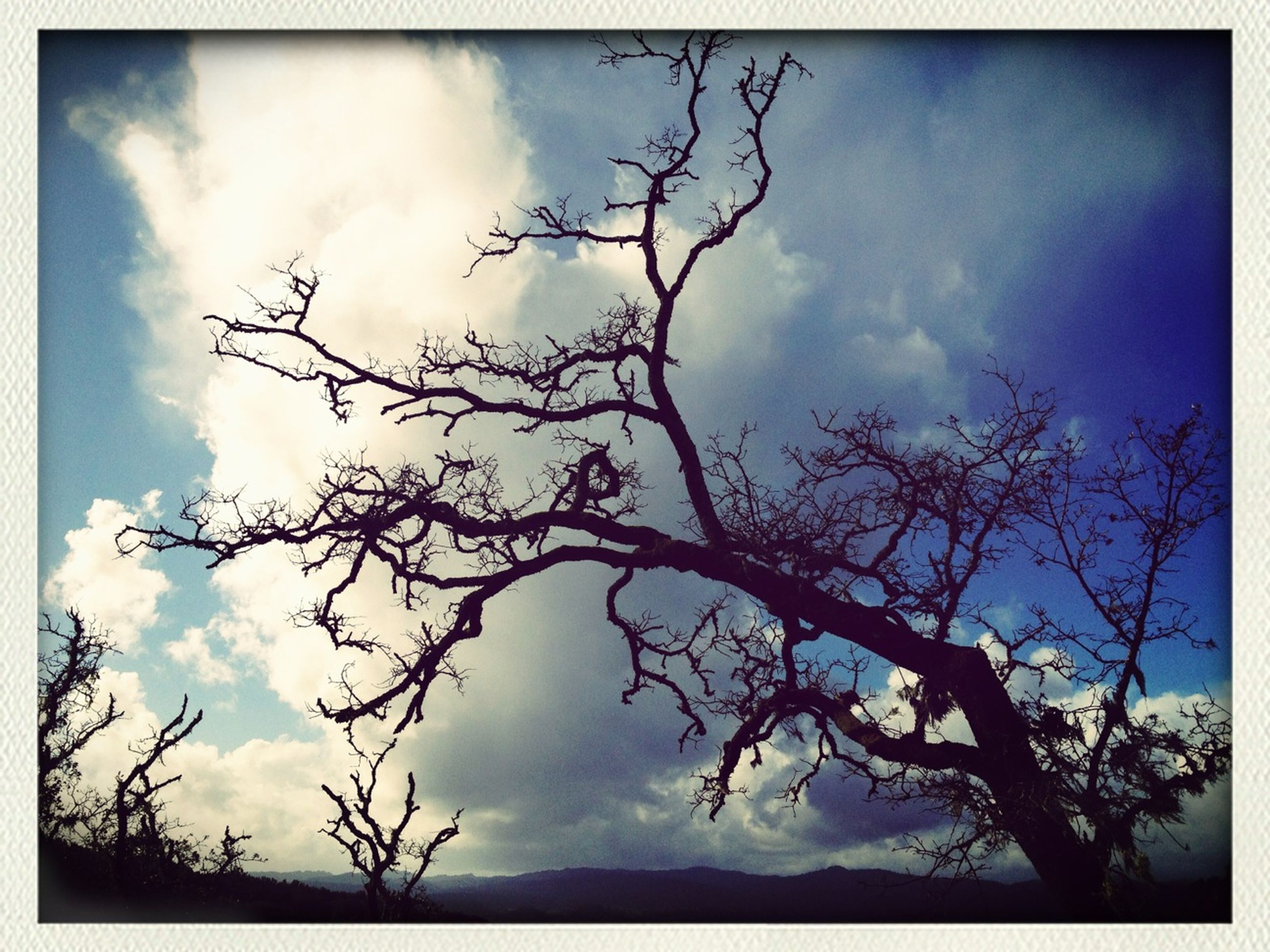 sky, low angle view, transfer print, cloud - sky, cloudy, silhouette, tree, bare tree, tranquility, cloud, auto post production filter, beauty in nature, scenics, nature, tranquil scene, branch, overcast, outdoors, no people, cloudscape