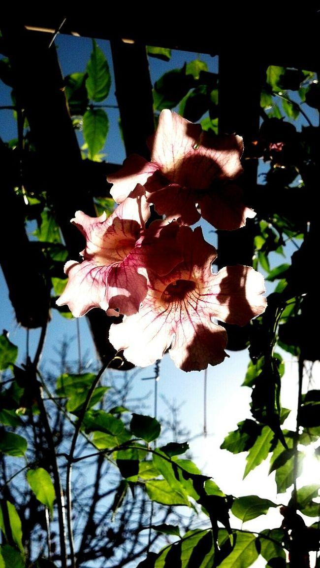 Flowers Life Colors Sky Green Sun Eye4photography  Eyemphotography EyeEm Best Shots Summer Views