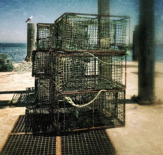 Thinking out of the box Lisboa Portugal Cages Seagull Cascais Cascais Portugal Sea And Sky Grunge GrungeStyle Fish Cage