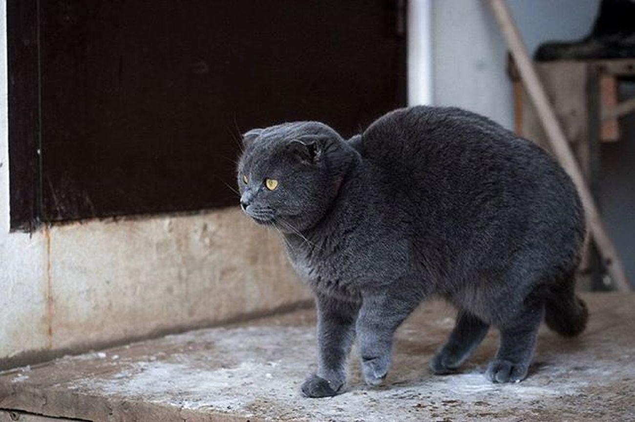 Зима, что ты с нами делаешь??? зима Клин Русино котэ кот дом фото фотография холодно тепло
