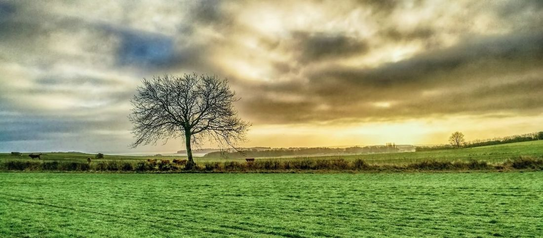 Agriculture Beauty In Nature Cloud - Sky Field Grass Growth Landscape Nature No People Outdoors Rural Scene Scenics Sunset Tranquil Scene Tranquility Tree