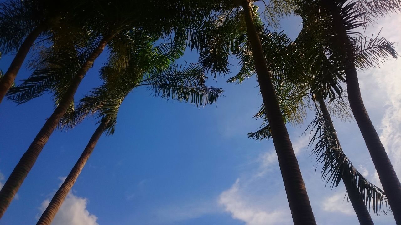 Hello World Relaxing Sky Palm Trees Thailand