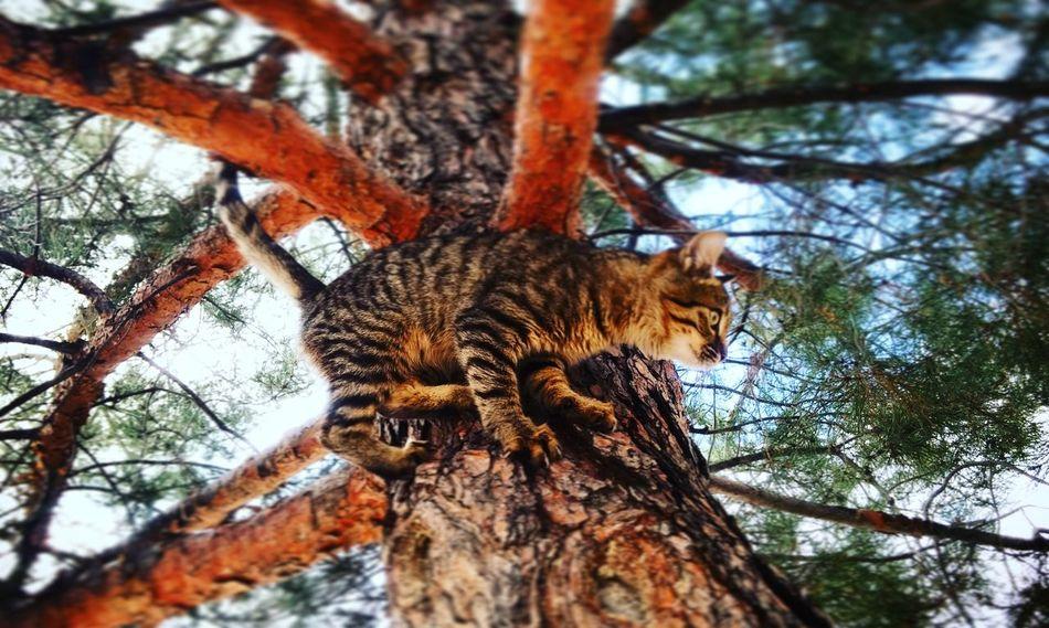 Cat Cats Tiger Lion Leopar Greeneyes :) Summer ☀
