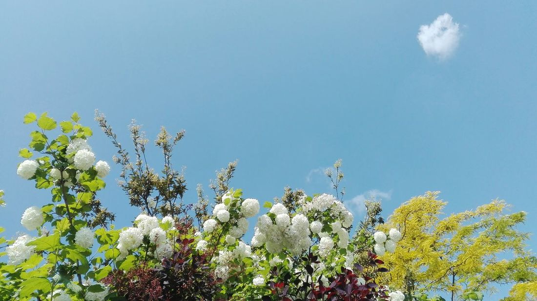 Nature Sky Flower Beauty In Nature No People Plant Tree Day Outdoors Cloud Cloudchaser Nofilter Nofilterneeded