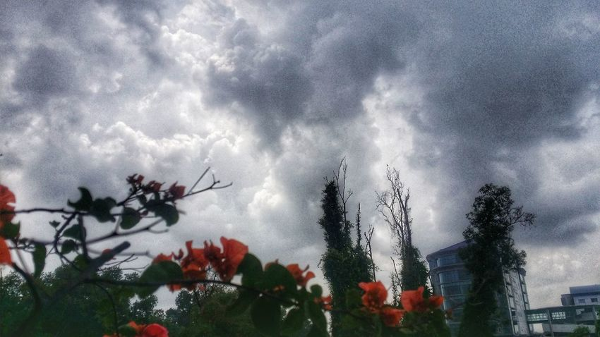 Last Rain Before Spring Cloud - Sky Low Angle View Sky Nature Tree Growth No People Beauty In Nature Outdoors Plant Day Freshness Malaysia