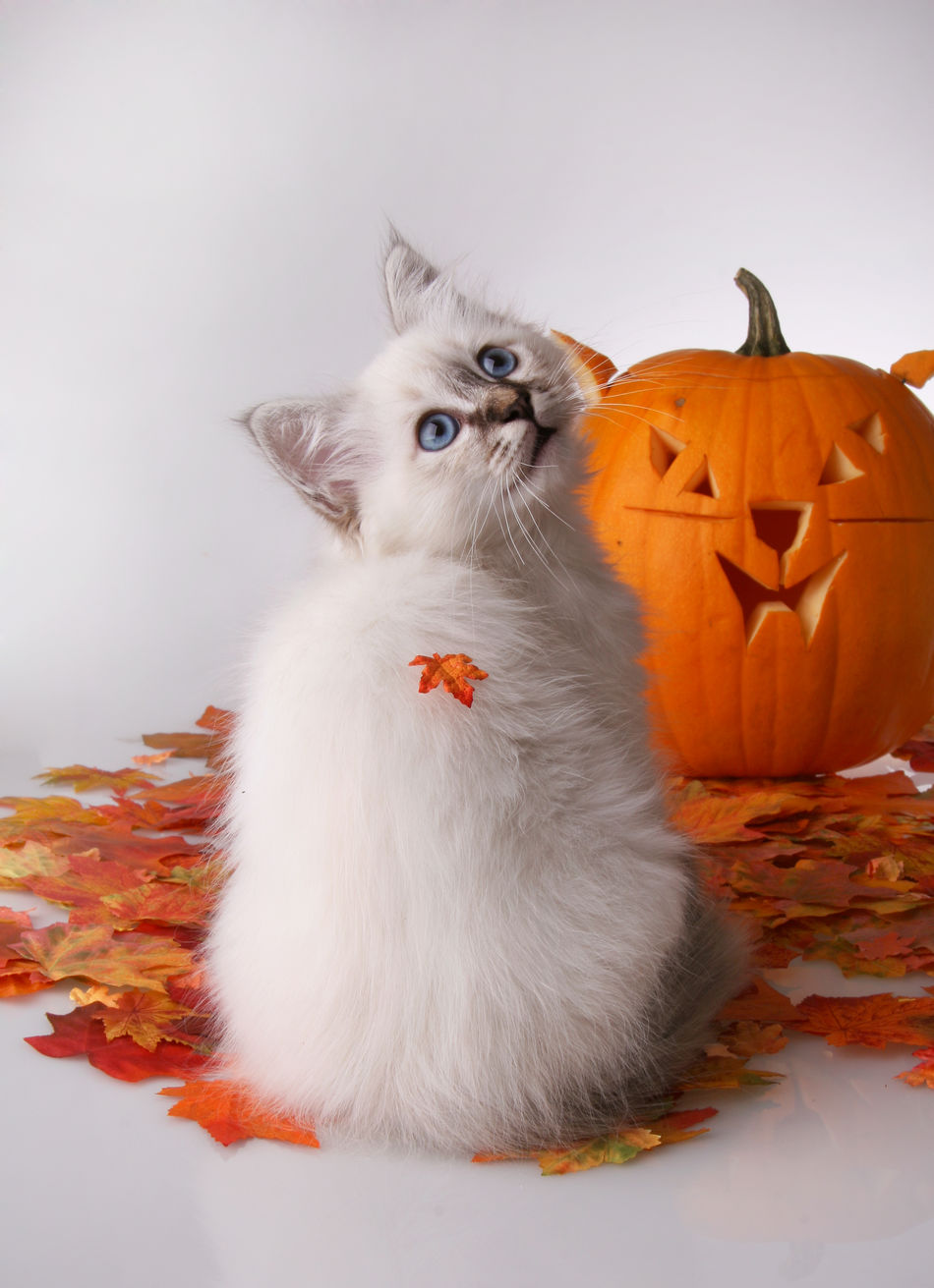 Beautiful stock photos of baby katzen, Animal Themes, Art, Art And Craft, Autumn