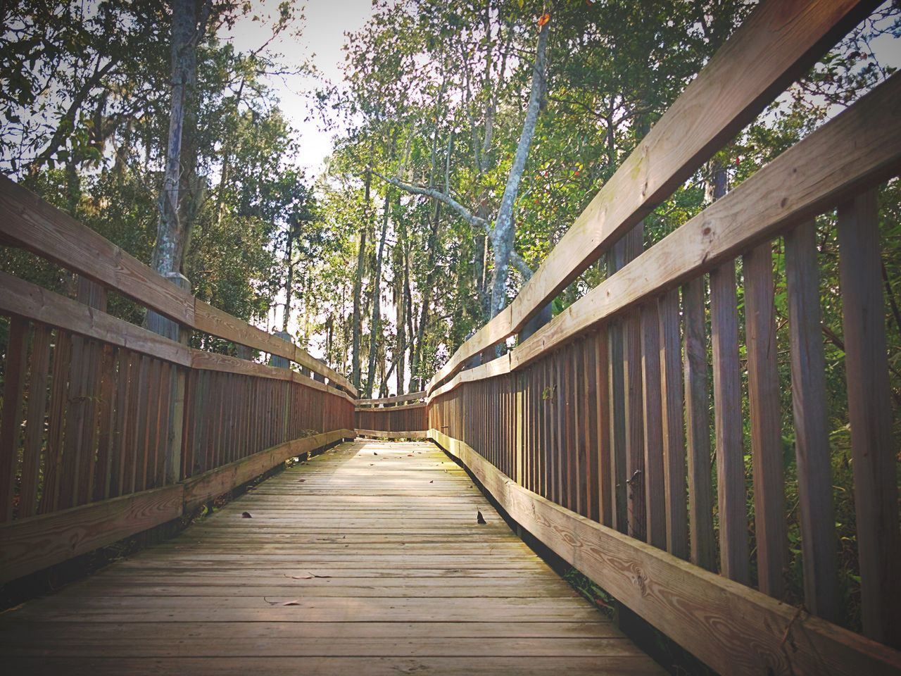 tree, the way forward, wood - material, day, outdoors, no people, railing, bamboo - plant, green color, wood paneling, nature, footbridge, forest, built structure, bamboo grove