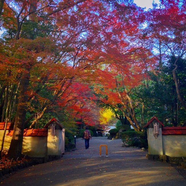 Autumn Colors Autumn Leaves Fall Colors Fall Beauty Colorful Museum Garden Kyoto Japan