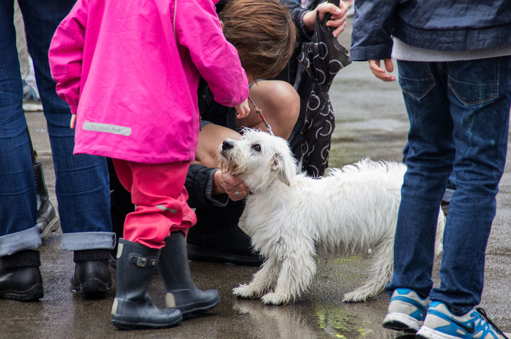Think the dog was a bit nervous in the crowd, happy when he saw his little human. Animal Themes Boy Children Crowd Crowds Dog Domestic Animals Friendship Girl One Animal People Pet Pink Rain Rainy Wellies  Wellingtons West Highland Terrier West Highland White Terrier Westie