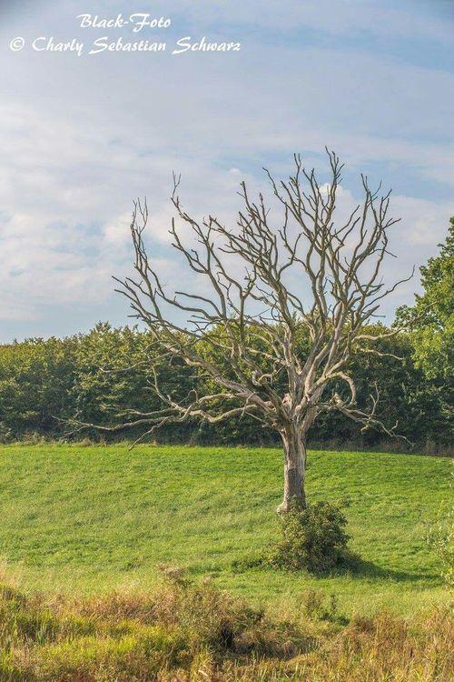 Canon 6D Herbststimmung Trittau Herbst