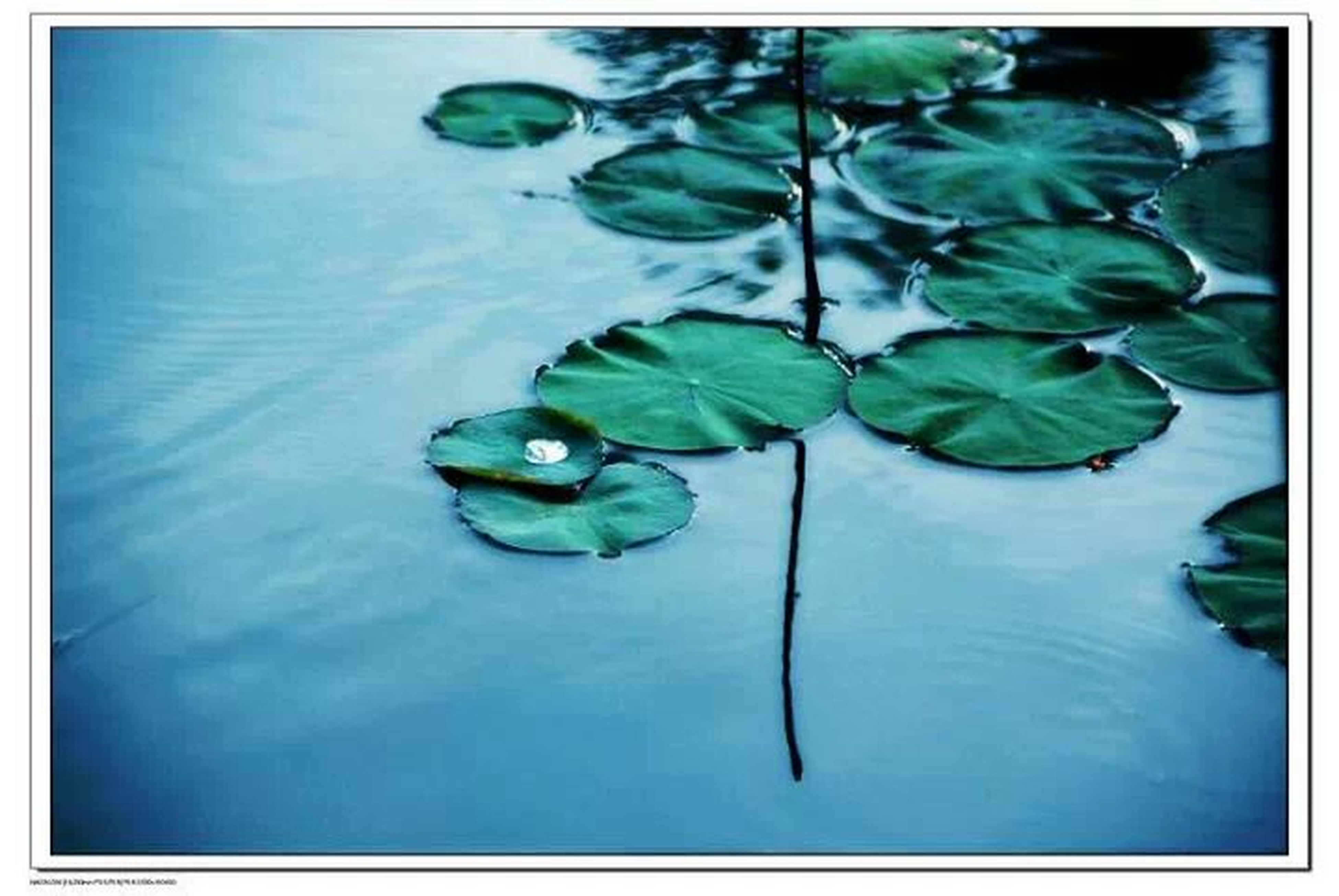transfer print, water, leaf, green color, auto post production filter, floating on water, growth, nature, blue, waterfront, freshness, plant, beauty in nature, high angle view, reflection, green, close-up, lake, tranquility, no people