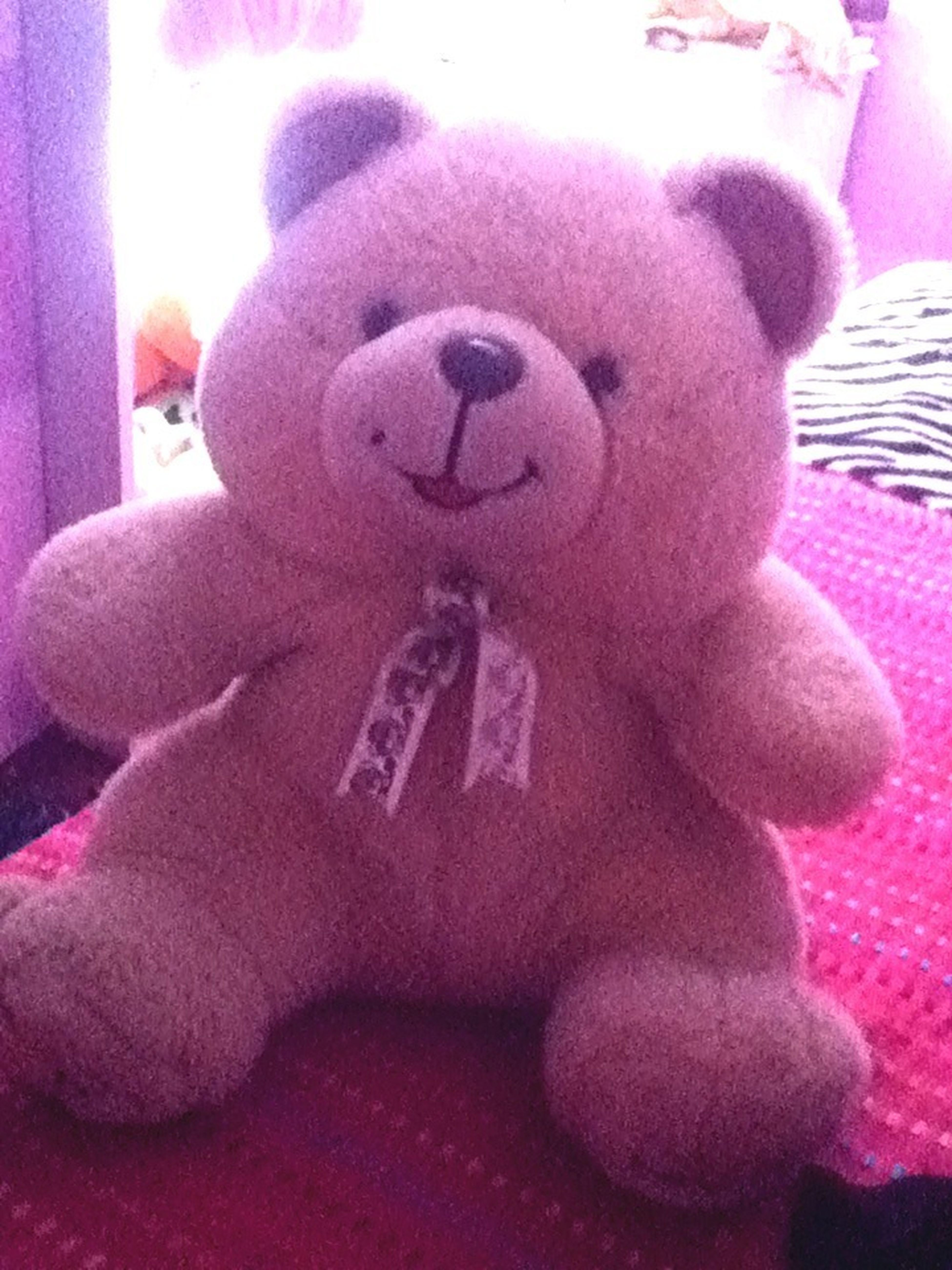 Mi Teddy