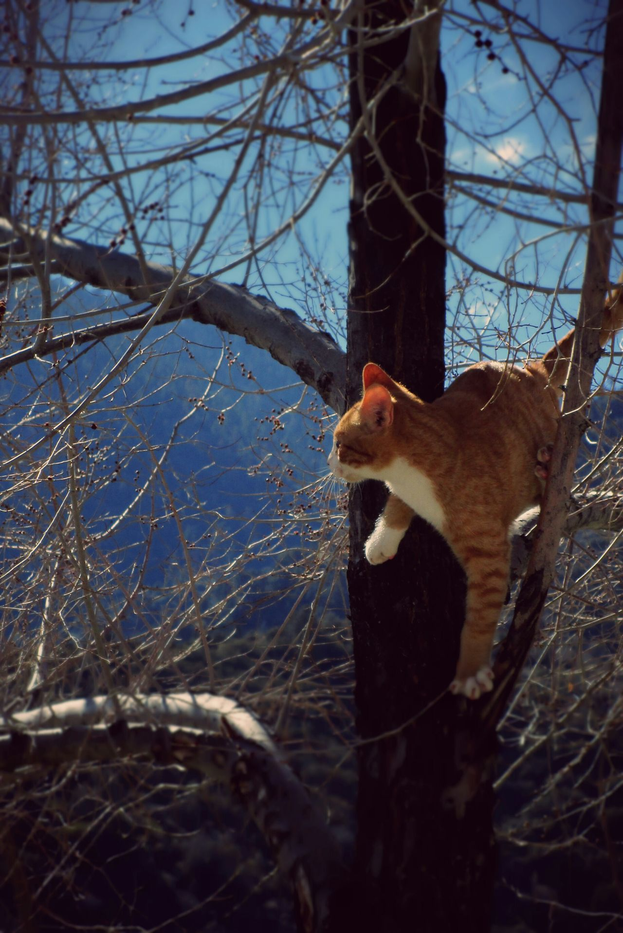 I Love My Cat Treegasmic Tuesday Wanderlust Wednesday Hugging A Tree Hanging Out EyeEm Nature Lover Pets Corner Cat Kitty The Moment - 2015 EyeEm Awards