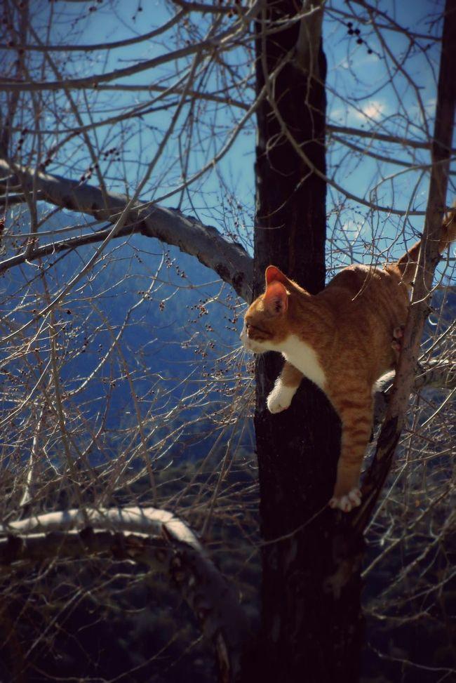 I Love My Cat Treegasmic Tuesday Wanderlust Wednesday Hugging A Tree Hanging Out EyeEm Nature Lover Pets Corner Cat Kitty The Moment - 2015 EyeEm Awards