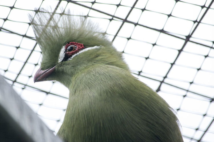 Nature Nature Photography Turaco Animal Themes Beak Beauty In Nature Bird Cage Close-up Day Nature Nature_collection Naturelovers No People One Animal Outdoors