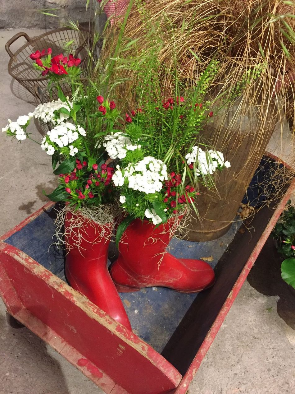 Rubber boots used as flower pots Flower Plant Fragility Red Growth Beauty In Nature Nature Freshness Leaf No People Petal Green Color Day Outdoors Close-up Flower Head Rubber Boots Flower Pot