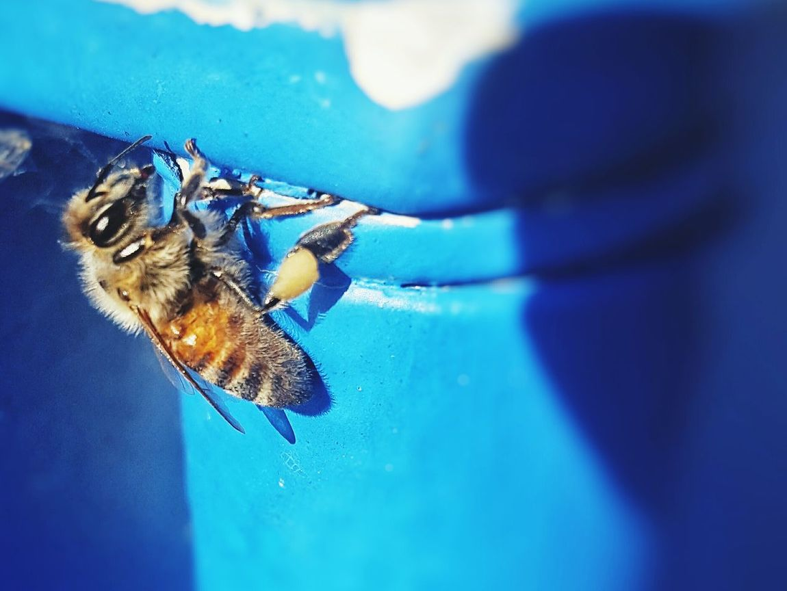 Beeatwork Bee Nature British Columbia Getty X EyeEm Deltabc Canada Vancouver BC Jrmediagroup 604now