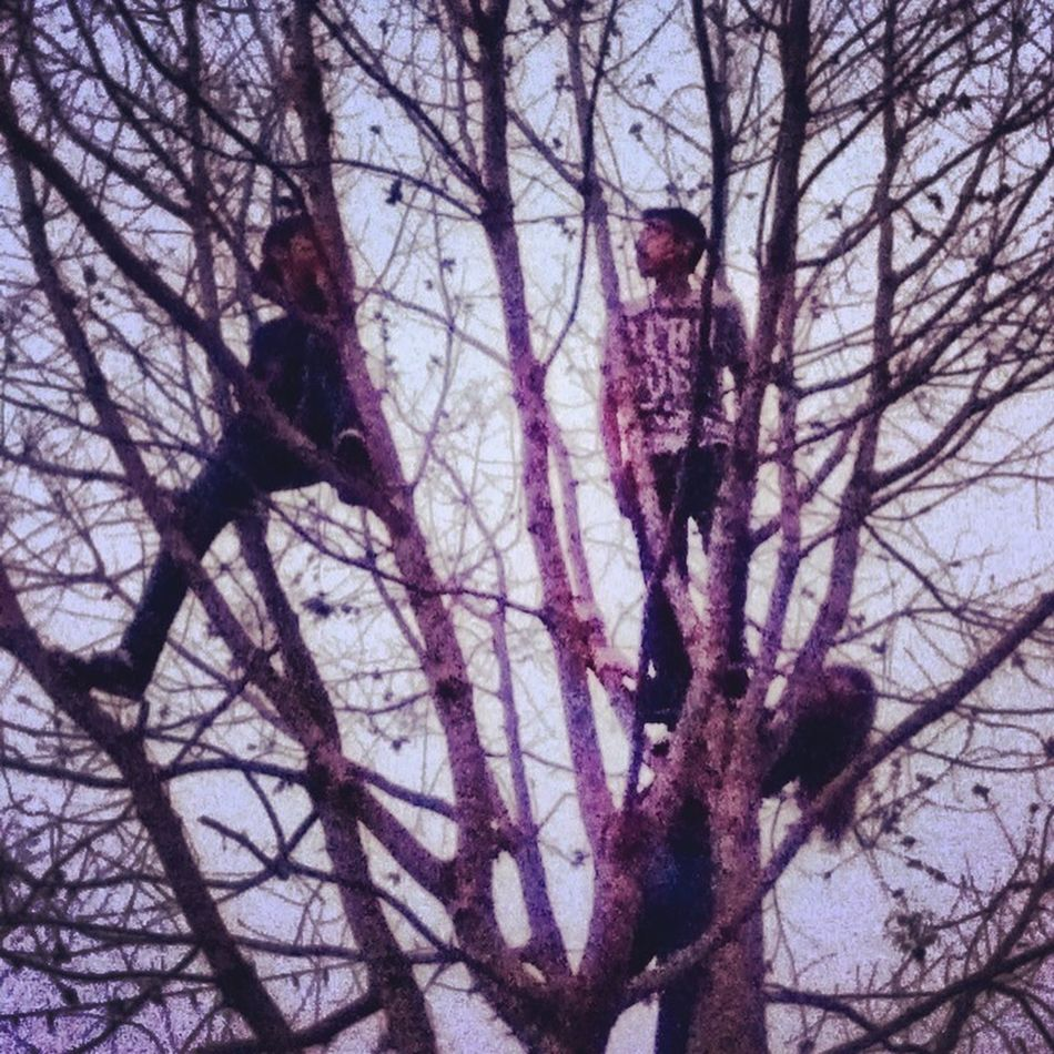 Playing In The Trees